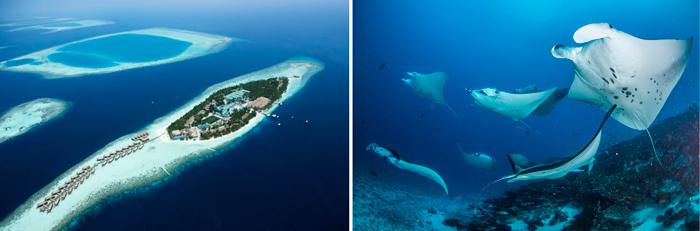 Райский остров Мальдивы вместе с CACTUS